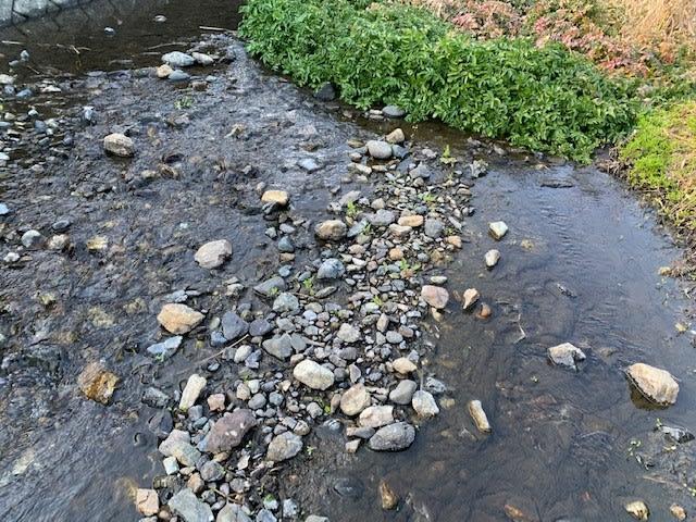 クレソンの生えた川辺
